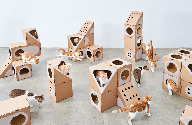 Multi Cat Thing