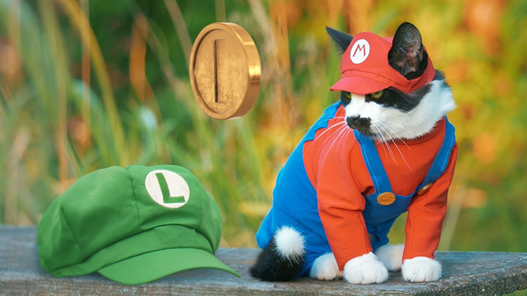 Super Mario Cat and Human Luigi Set Out to Save the Princess in 'Super Mario Cat Bros.'