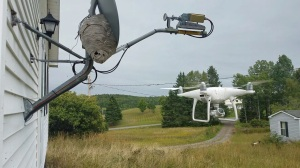 A Drone Hovers Next to a Bald-Faced Hornet Nest