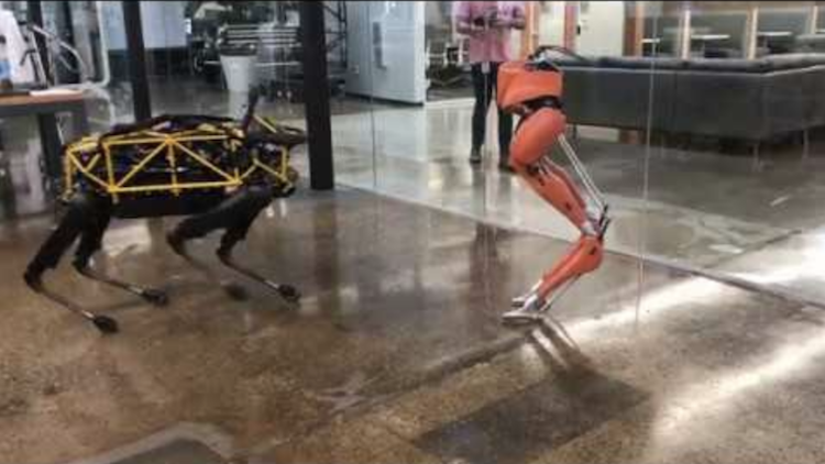 Cassie the Ostrich-Inspired Bipedal Robot Dances With a Robotic Dog During a Play Date