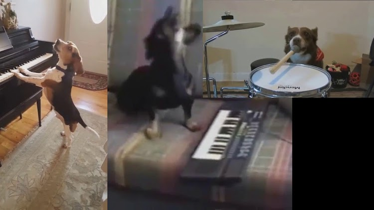 A Cacophonous Little Song Played by Talented Dogs