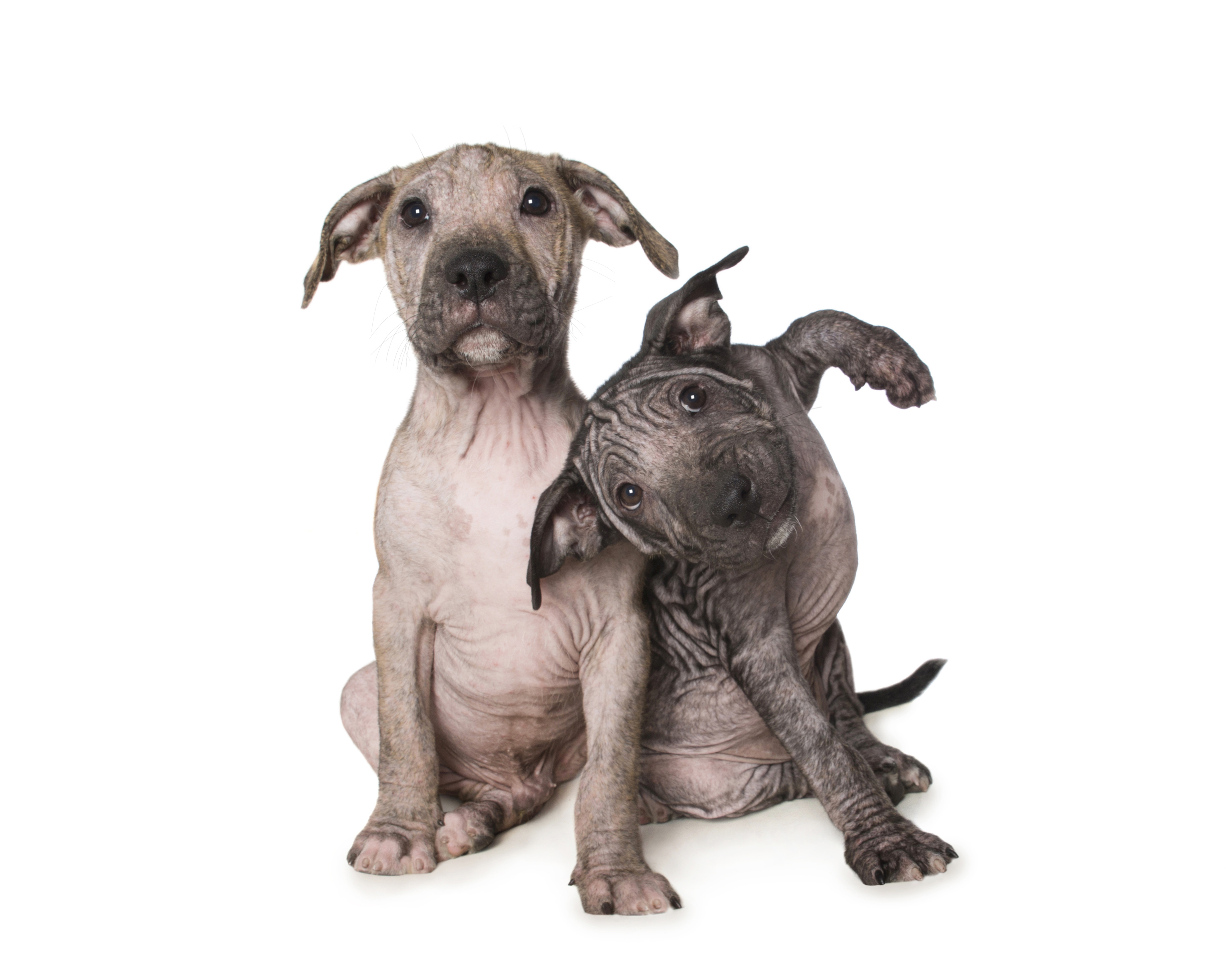 Dogs With Mange