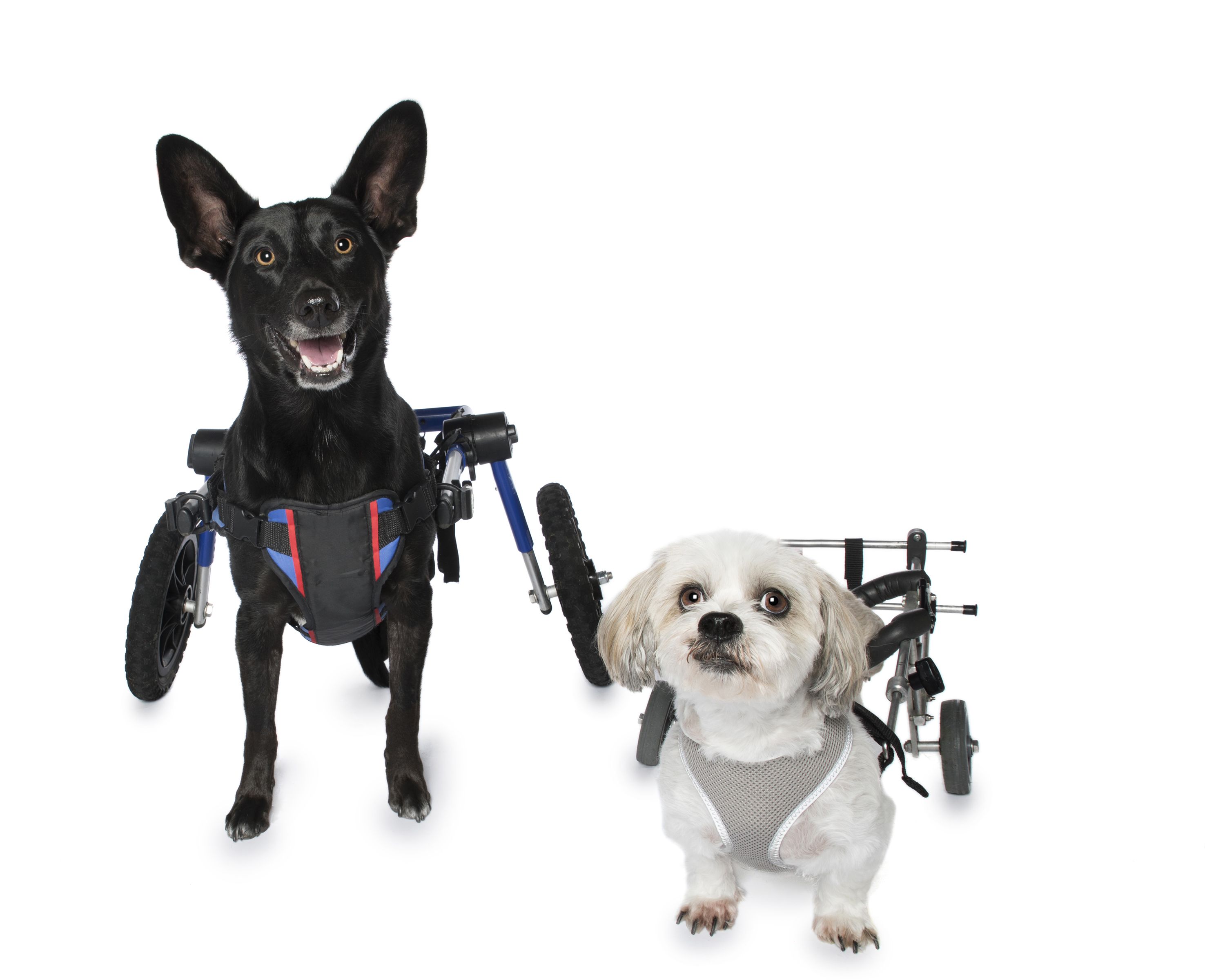 Dogs With Wheelchairs