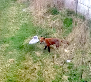 Fox Discarded Boot