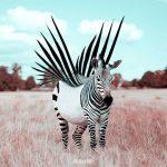 Julien Tabet Zebra