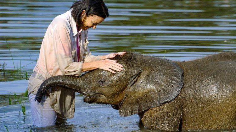 A Rescued Orphan Elephant Conquers Her Fear of Water With the Help of Her Loving Adopted Human