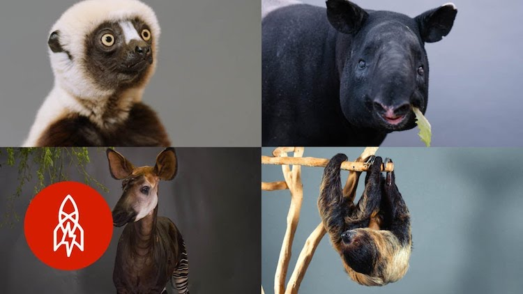A Heartbreaking Compilation of Endangered Animals Who May Soon Be On the Brink of Extinction