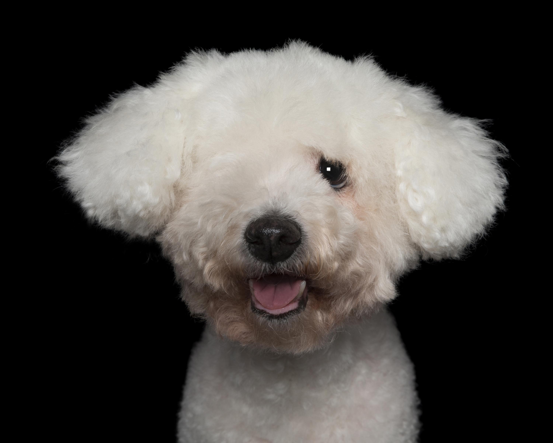 One Eyed Poodle