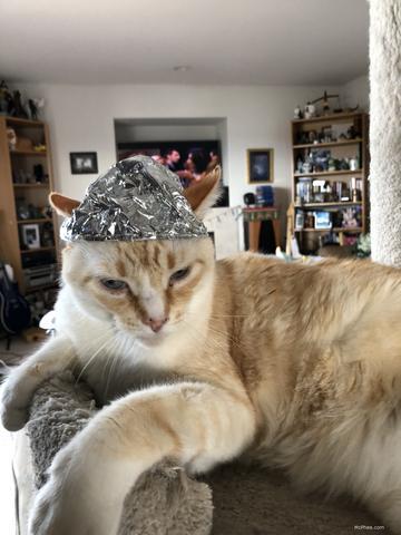 Red Cat Tin Foil Hat