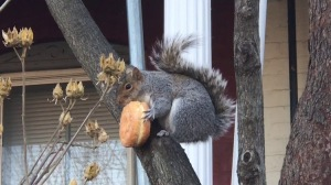 Squirrel Donut DC
