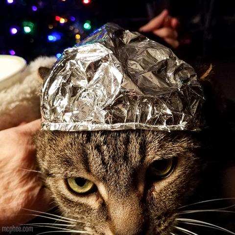 Tabby Tin Foil Hat