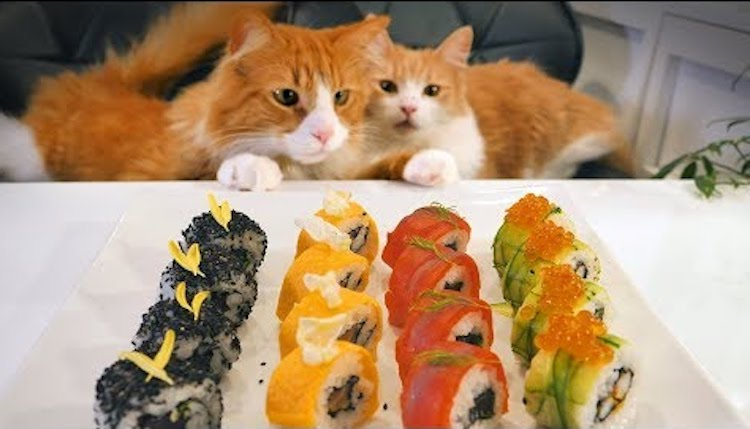 Japanese Culinarian Prepares American Style Sushi Rolls Under the Watchful Eyes of His Beloved Cats