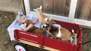 Baby Girl with Baby Goats