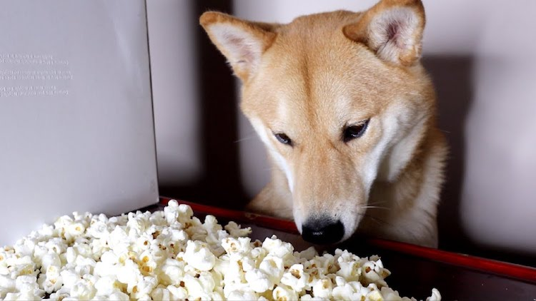 Haru Popcorn Eating Doge