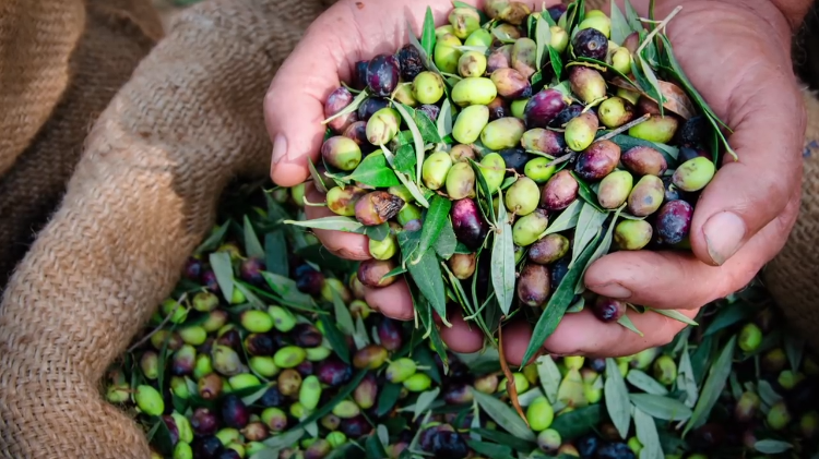 The Extremely Bitter Natural Compound That Make Raw Olives So Incredibly Inedible