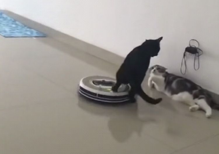 A Black Cat Casually Uses a Back Paw to Deflect an Incoming Roomba During a Heated Discussion