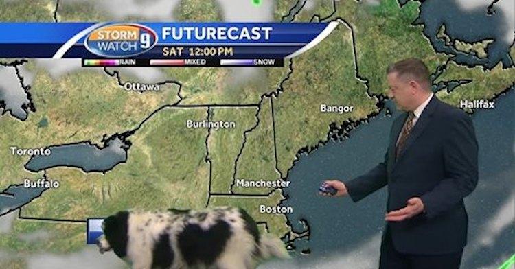 Dog Walks Across Weather Map