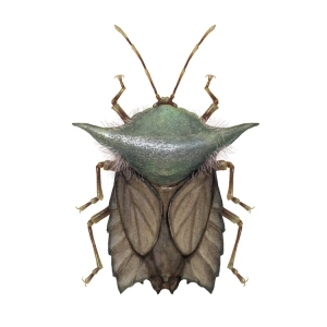 Insects Illustrated as Star Wars Characters