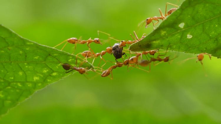 Mutuality Amongst Ants