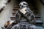 Realistic Three-Toed Sloth Costume
