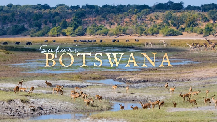 A Gorgeous 4K Flow Motion Timelapse That Captures The Incredible Sights of a Botswana Safari