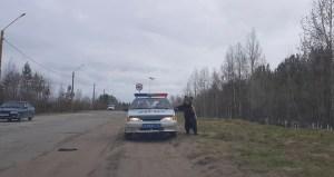 Bear Investigating Police