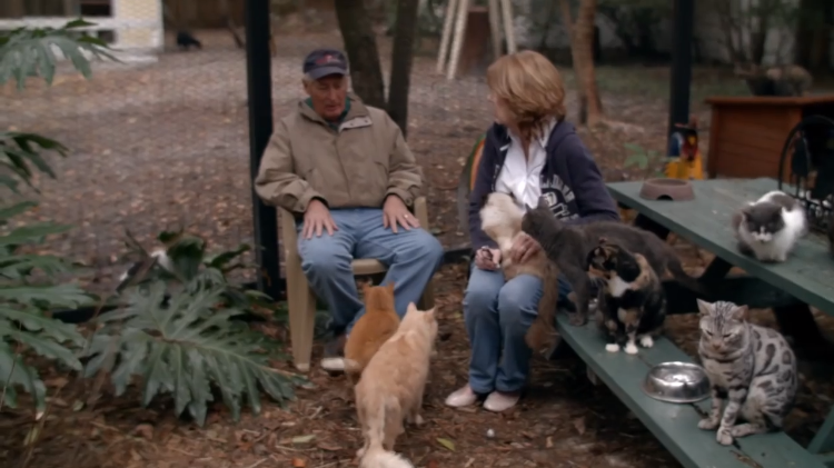 Retired Florida Couple Transforms Their Home Into a Sanctuary for Older Cats With Nowhere Else to Go