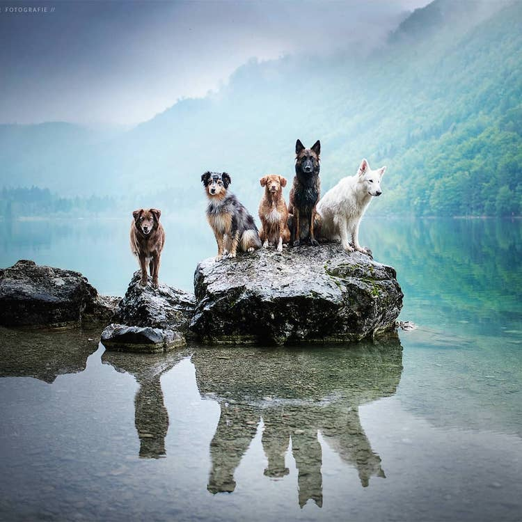 Talented Dog Photographer Shares Some Handy Tips for Capturing Perfect Pictures of Pooches