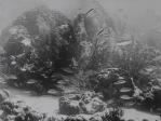 First Underwater Footage