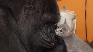 Koko With Mrs Gray