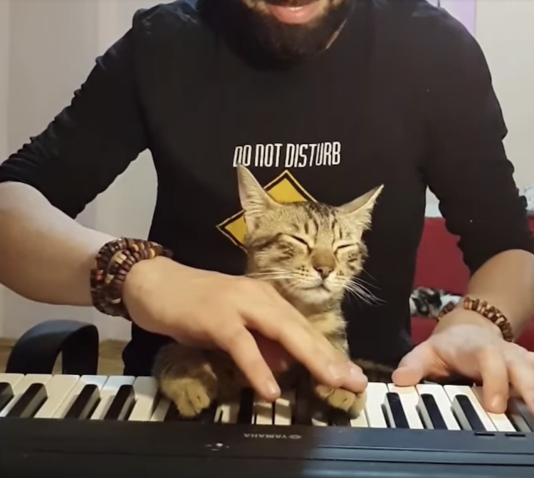 A Drowsy Cat and His Piano Playing Human Make Beautiful Music Together
