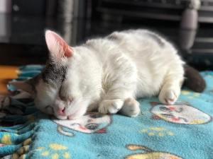 Potato Stumpy Cat Giselle