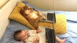 Shiba inu and Baby Leo Watch Netflix