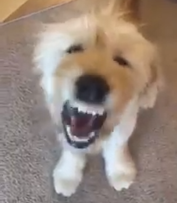 A Little Puppy Hilariously Chomps His Big Teeth Over and Over While Learning How to Bark