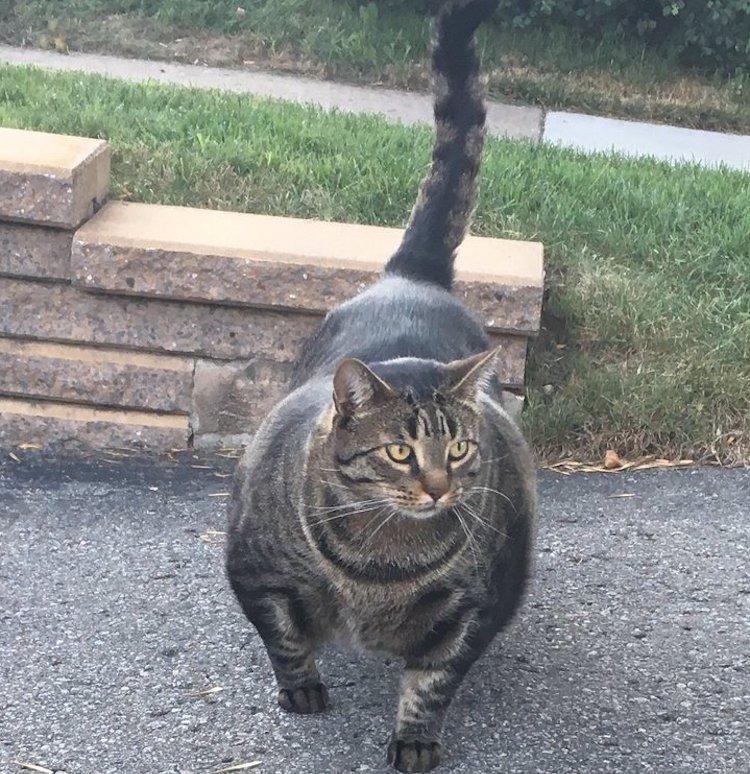 Big Cats Tumblr