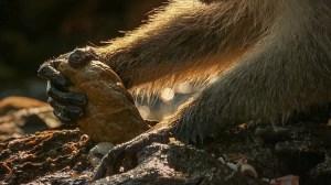 Monkey Rock Shell