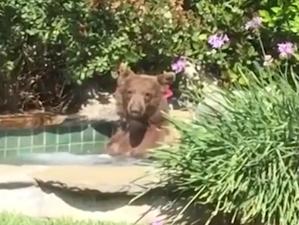 Bear in Hot Tub