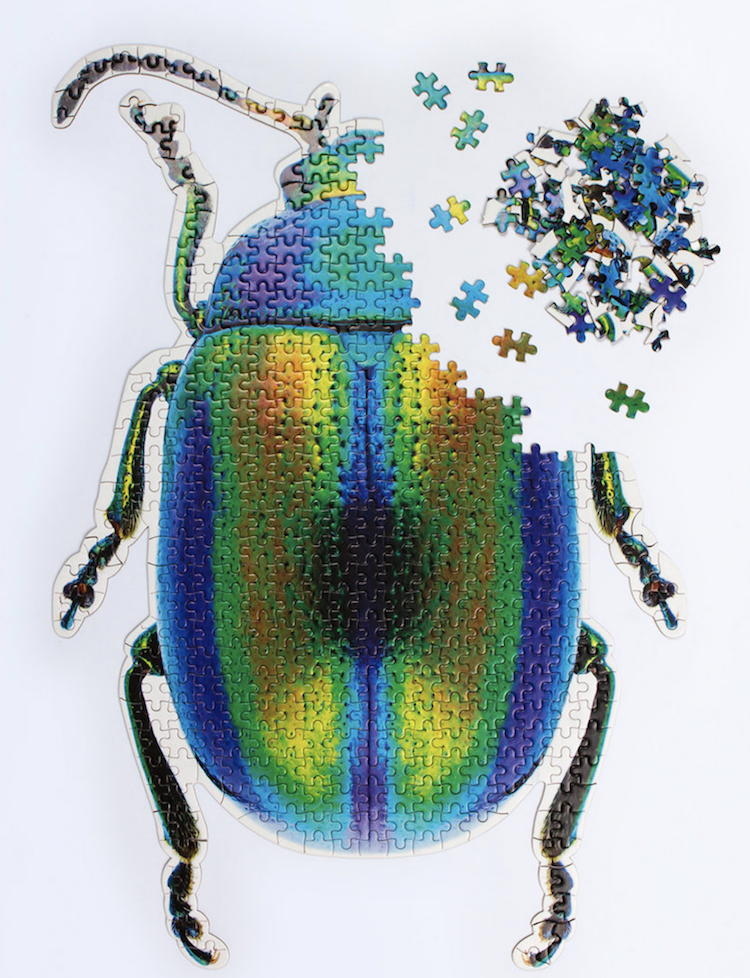 A Beautiful Puzzle in the Shape of a Colorful Beetle