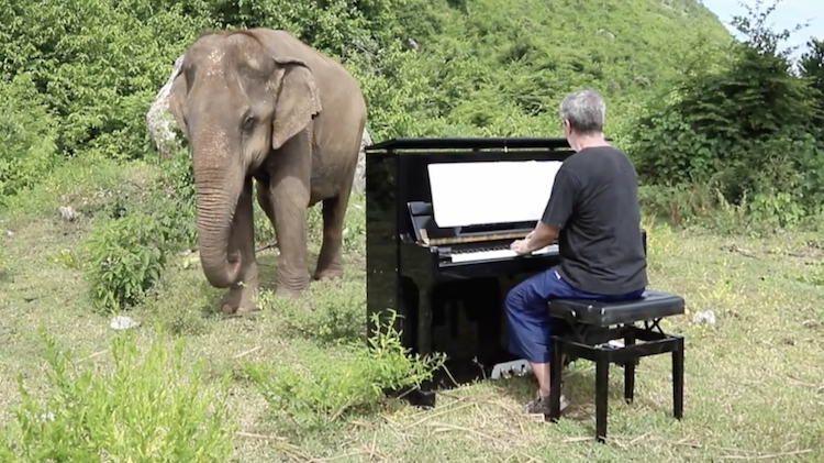 Talented Pianist Plays Beautiful Classical Music for Blind Elephants at a Sanctuary in Thailand