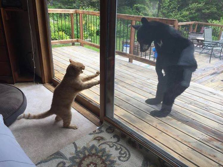 A Watchful Cat Stands on His Hind Legs to Confront a Wayward Bear Through a Sliding Glass Door
