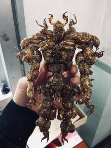 Cicada Shell Superhero