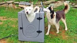 Crazy Russian Hacker Dog Spa