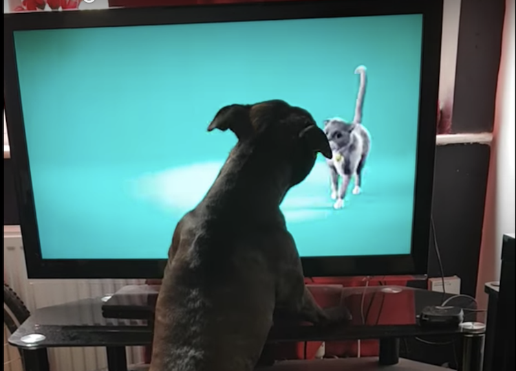 TV Loving Dog Angrily Barks at a Commercial That Has an Animated Cat Strutting Across the Screen