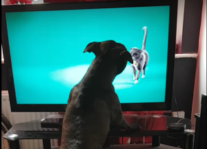 Dog-Barks-at-Cat-in-Commercial