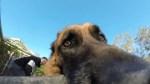 Kody GoPro Evading Human