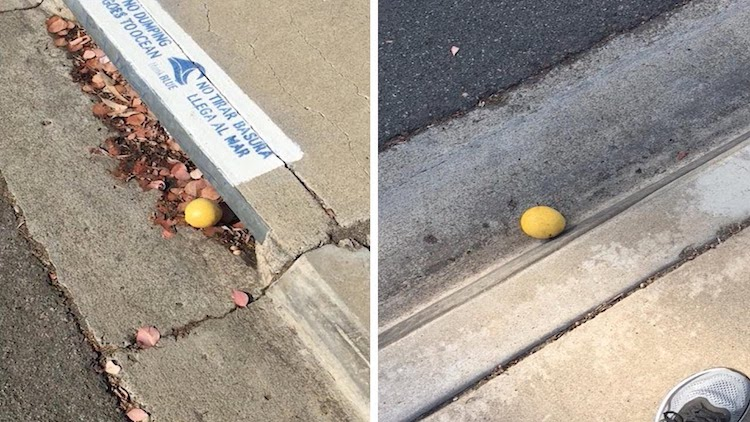 Man Follows a Random Lemon Rolling Down a Hilly Street in San Diego For About a Quarter Mile
