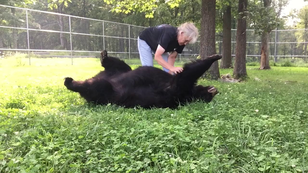 A Vocally Appreciative Rescued Bear Gets a Very Thorough Summer Brushing by Her Human Keeper