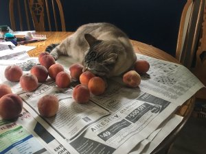 Cat Sleeping with Peaches
