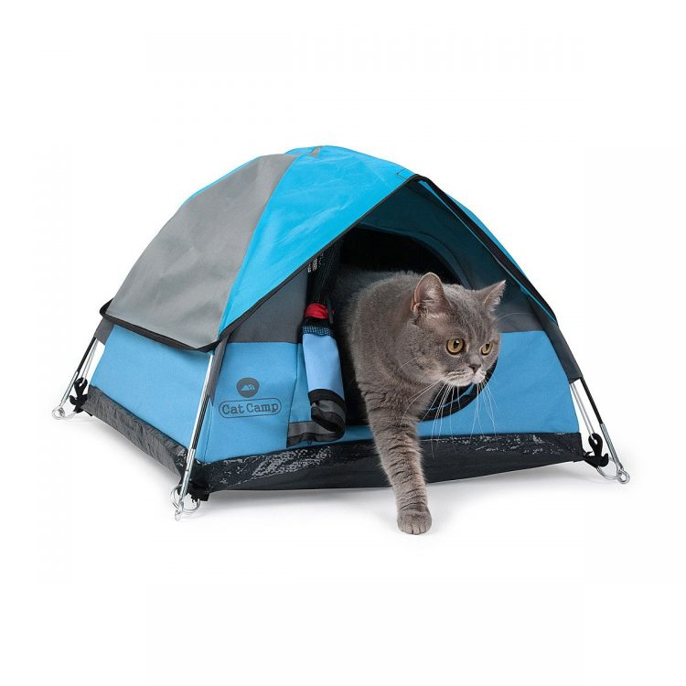 Exiting Cat Tent