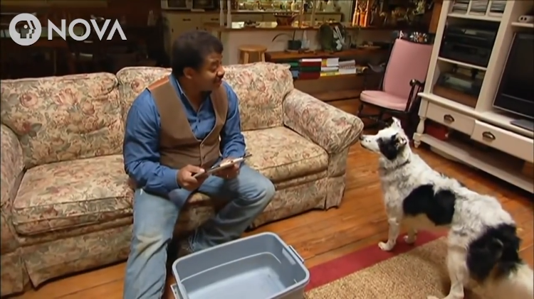 Neil deGrasse Tyson Challenges Chaser the Border Collie to Retrieve a Doll She'd Never Seen Before